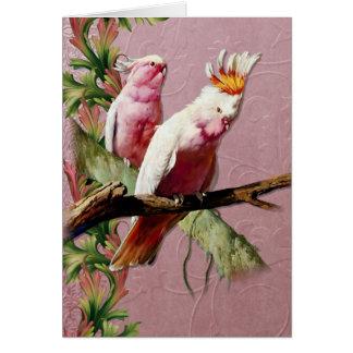 Resting Pink Cockatoos - Customize Card
