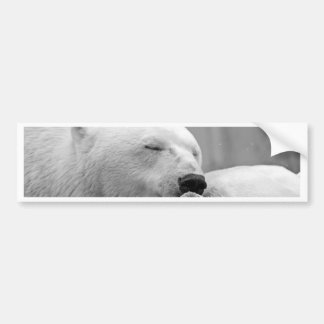 Resting Polar Bear Bumper Sticker