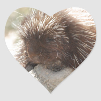Resting Porcupine Heart Sticker