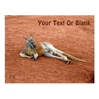Resting Red Kangaroo Buck Postcard