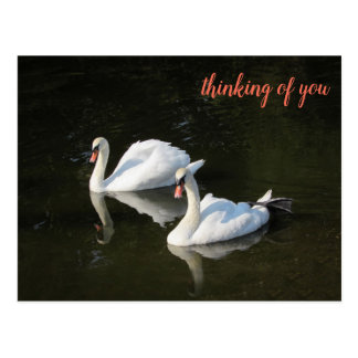 Resting Swans with Salmon Triangle Pattern Postcard
