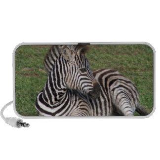 Resting Zebra Speakers