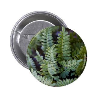 Resurrection Fern - Polypodium polypodioides Pinback Buttons