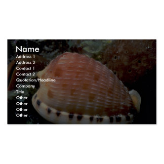 Reticulated cowrie helmet Cypraecassis testiculus Business Card Templates