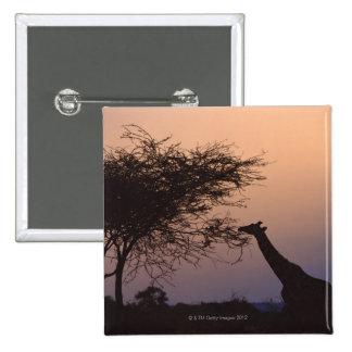 Reticulated Giraffe 2 15 Cm Square Badge