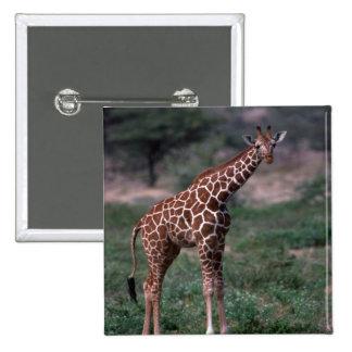 Reticulated Giraffe Button