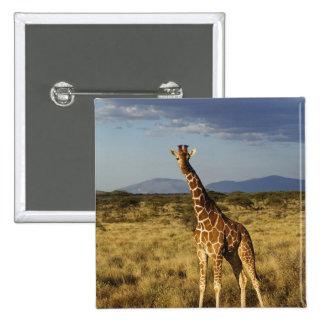 Reticulated Giraffe, Giraffe camelopardalis 2 15 Cm Square Badge