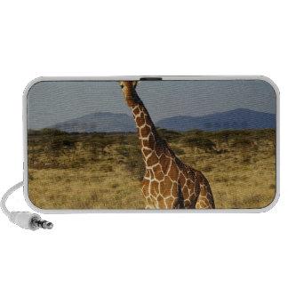 Reticulated Giraffe, Giraffe camelopardalis 2 Mini Speakers