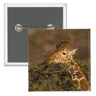 Reticulated Giraffe, Giraffe camelopardalis 15 Cm Square Badge