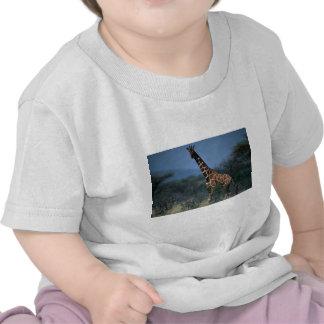 Reticulated Giraffe T Shirt