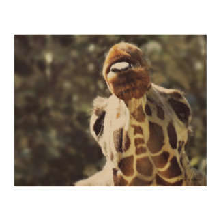 Reticulated Giraffe Wood Wall Art