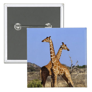 Reticulated Giraffes, Giraffe camelopardalis 3 15 Cm Square Badge