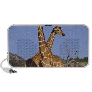 Reticulated Giraffes, Giraffe camelopardalis 3 Travelling Speaker