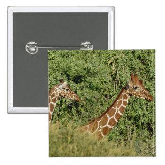 Reticulated Giraffes, Giraffe camelopardalis 15 Cm Square Badge