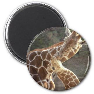 reticulated giraffes refrigerator magnet