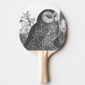 Retro brooding owl drawing