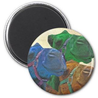retro camels magnet