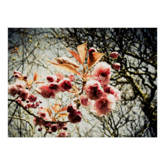 Retro effect cherry tree blossom poster