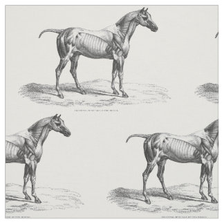 Retro horse muscle anatomy picture textile fabric