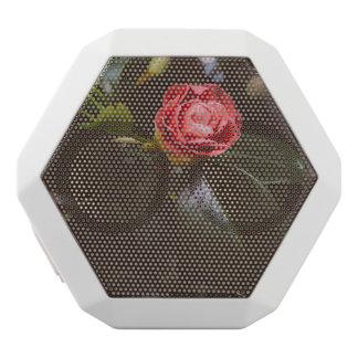 Retro Pink Rose Photograph, Romantic, Elegant