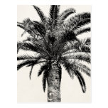 Retro Tropical Island Palm Tree in Black and White Postcard