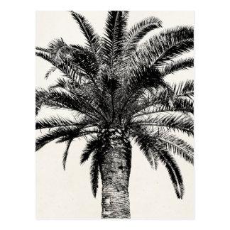 Retro Tropical Island Palm Tree in Black and White Postcard