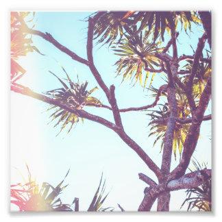 Retro Tropical Tree | Photo Print
