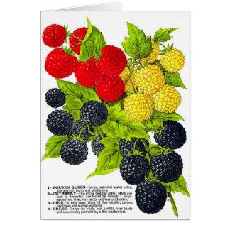 Retro Vintage Fruit Berries Blackberries Varieties Greeting Cards