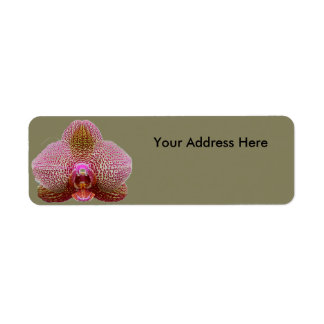 Return Address Labels - Earth Star