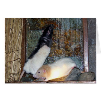Rex and Gizmo Pet Rat Note Card