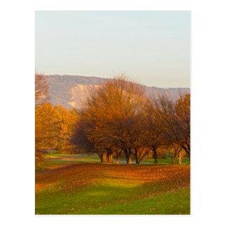 Rheinaue Park Postcard