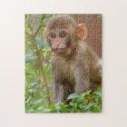 Rhesus Monkey Baby, Monkey Temple, Jaipur Jigsaw Puzzle