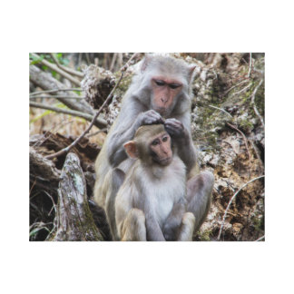 Rhesus Monkeys Canvas Print