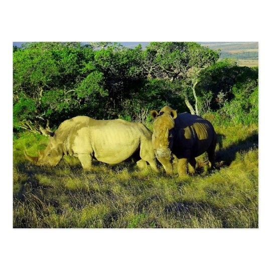 rhino couple postcard