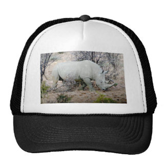 Rhino from South Africa Cap