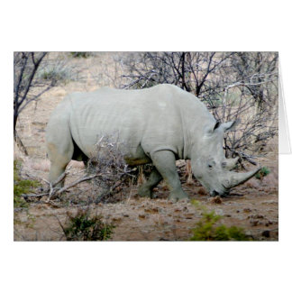 Rhino from South Africa Card