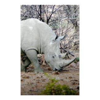 Rhino from South Africa Personalised Stationery