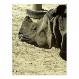 Rhino Profile Postcard