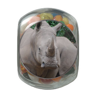 Rhino Romp Jelly Belly Candy Jars
