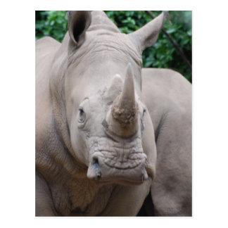 Rhino Romp Postcard
