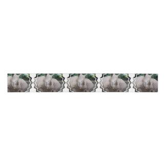 Rhino Romp Grosgrain Ribbon