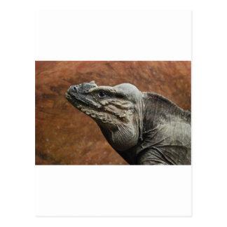 Rhinoceros Iguana Postcard