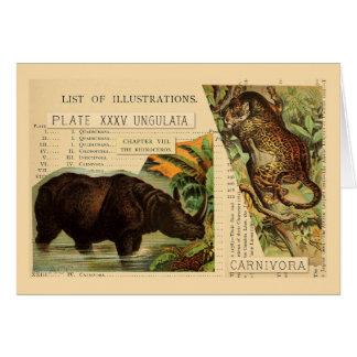 Rhinoceros Jaguar Animal Illustrations Card