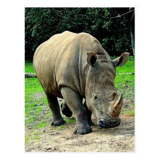 Rhinoceros Postcard