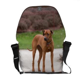 Rhodesian Ridgeback dog beautiful photo, gift Messenger Bags