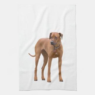 Rhodesian Ridgeback dog beautiful photo, gift Tea Towel