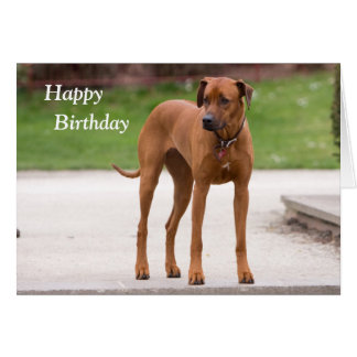 Rhodesian Ridgeback dog photo birthday card