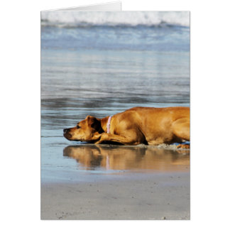 Rhodesian Ridgeback - Is the Water Cold? Card