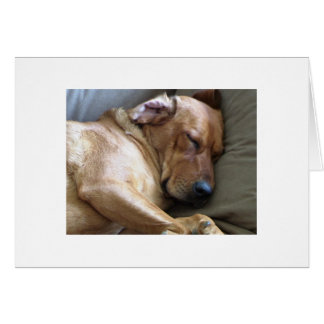 Rhodesian Ridgeback Labrador Dog Mix Card
