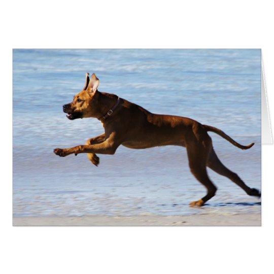 Rhodesian Ridgeback - Leap Card